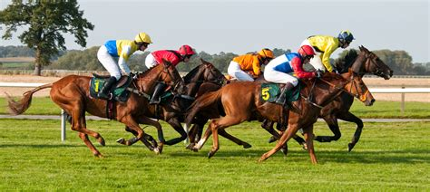 How To Win Money On Horse Racing - panda sweeps horse racing tips 01 11 13 panda sweepspanda sweeps