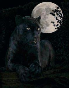 imagenes de jaguar blanco artist naturalist robert bateman canadian 1930