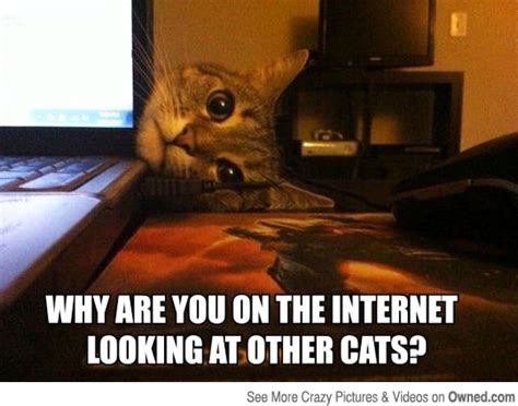 Internet Cat Meme - why are you on the internet cat meme cat planet cat planet