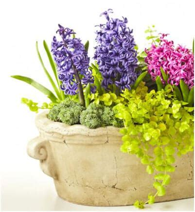 best flowers for small pots 125 container garden ideas and tips for garden pots and