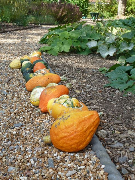Fruit And Vegetable Garden Garden Fruits And Vegetables