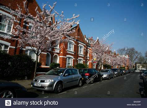 St Green Blossom cherry blossom on quarrendon fulham stock photo royalty free image 23927702