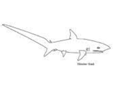 thresher shark coloring page sharks coloring pages