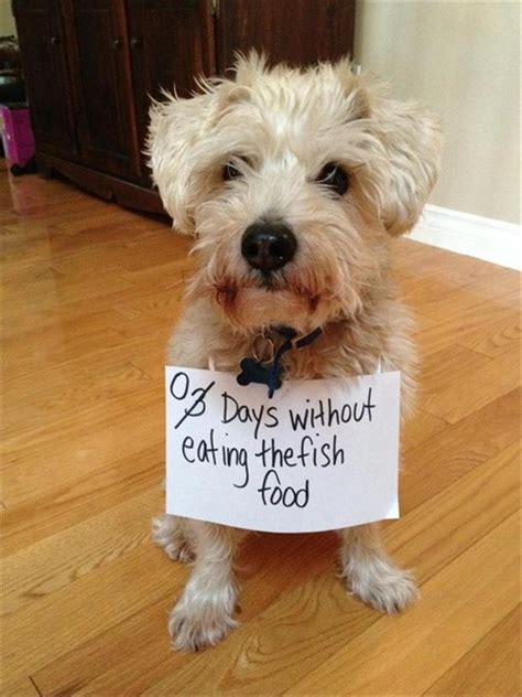 is tuna bad for dogs bad notes 58 dump a day