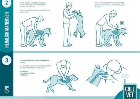 puppy cpr how to properly administer cpr to a pup fans