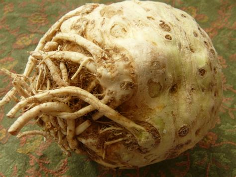 root vegetables pictures and names root vegetables 101 a primer on the most underappreciated