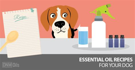 recipe for good smelling dog shoo homemade spray for dogs to smell good homemade ftempo
