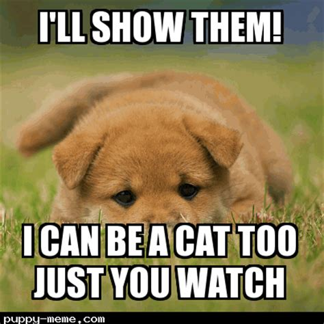 Dog Cat Meme - dog cat