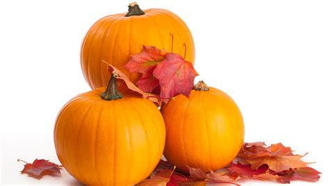 images of pumpkins for day 9 win free pumpkins