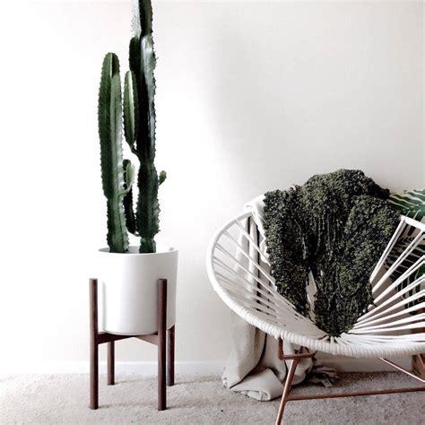 cactus trend the cactus trend the interior editor
