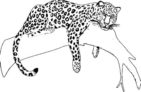 Jaguar Coloring Pages Only Coloring Pages Coloring Pages Jaguar