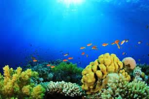 wallpaper oceans wallpapers hd exotic fish wallpaper omg wallpaper