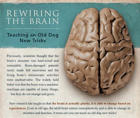 how your brain works and how to it