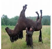 What Do They Eat In This Country To Be Strong As A Horse