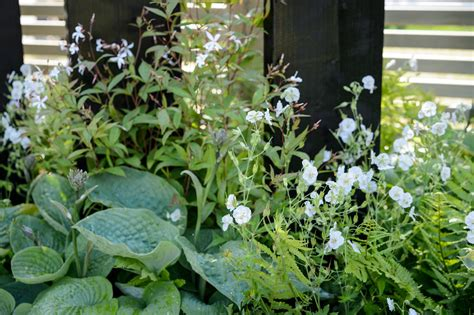 plants   north facing border gardenersworldcom