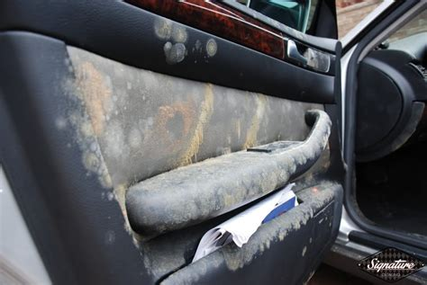 mould on car upholstery extreme winter mold removal signature detailing nj