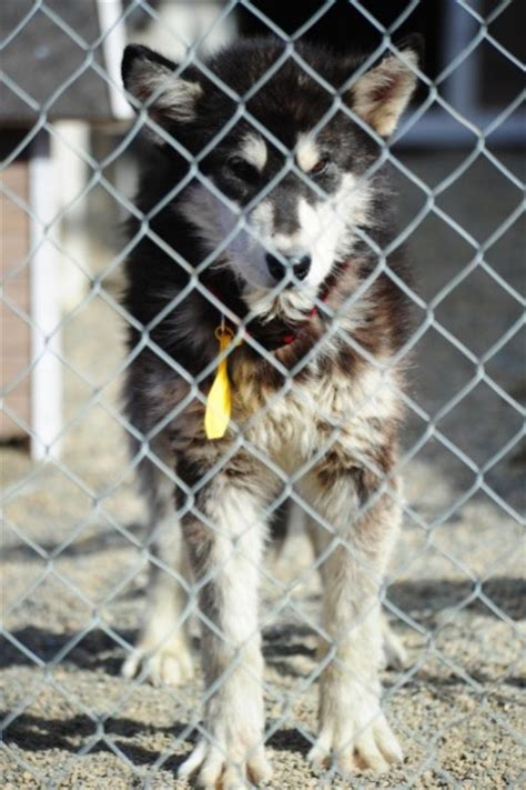 are puppy mills illegal puppy mill and illegal pot operation busted in jefferson city helena local news feed