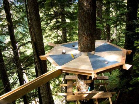 ideas for building a house magic tree house in the middle of a fir forest and few