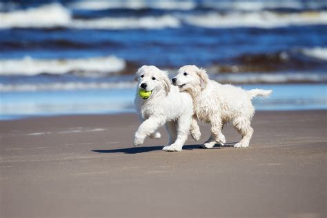 san diego puppies san diego beaches pet suites