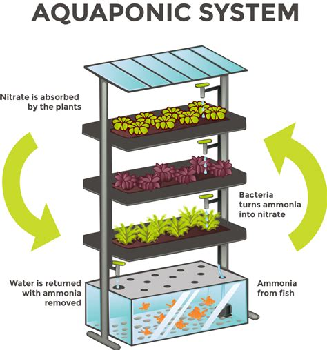 project feed  aquaponics