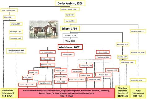 mr darleys arabian high limited genetic diversity in stallions revealed in study horsetalk co nz