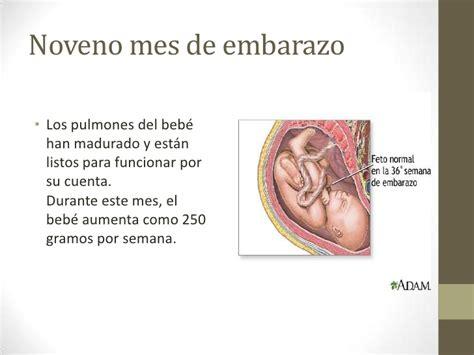 el beb es un desarrollo embrionario de los pulmones