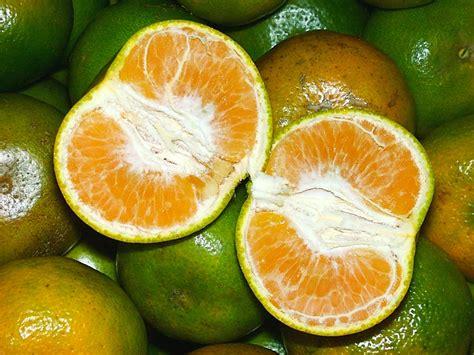 Diet Yang Baik Untuk Menurunkan Berat Badan jenis buah untuk diet sehat yang kaya nutrisi mencegahpenyakit