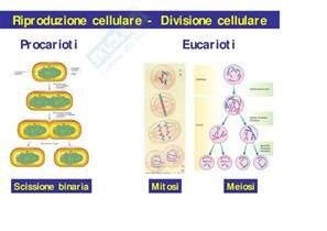 test scienze biologiche 2014 biologia lezione 8 2 176 parte slides