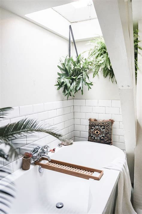 bathroom hanging plants best 25 hanging plants ideas on pinterest hanging plant