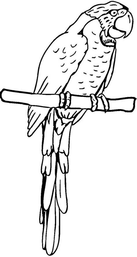 coloring page of a macaw parrot pirate parrot coloring