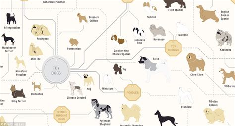pug chart the family tree of dogs infographic reveals how every breed is related daily mail