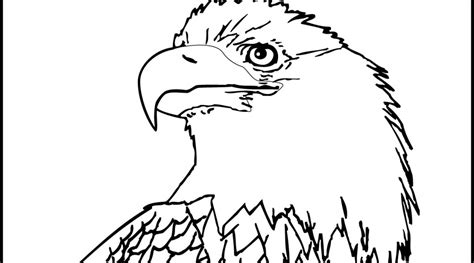 eagle head coloring pages eagle head coloring page coloring pages