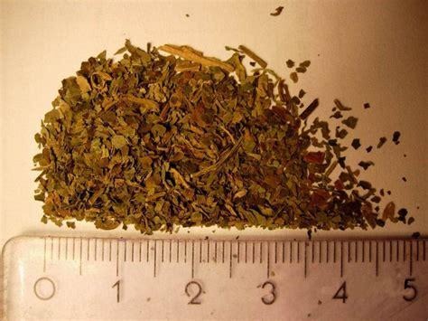 Sza?wia wieszcza (Salvia divinorum)
