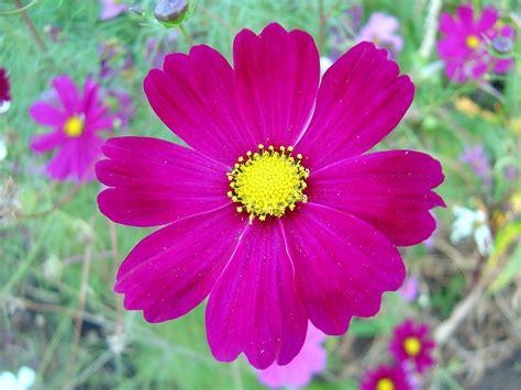Picture Flowers flower part 2 weneedfun