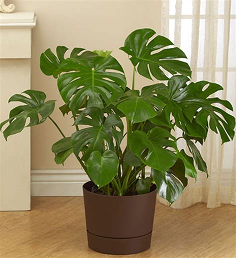 easy indoor plants easy house plants for indoor decor ideas 61 decomg