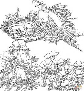 coloring book quail california valley quails and poppy flower coloring page