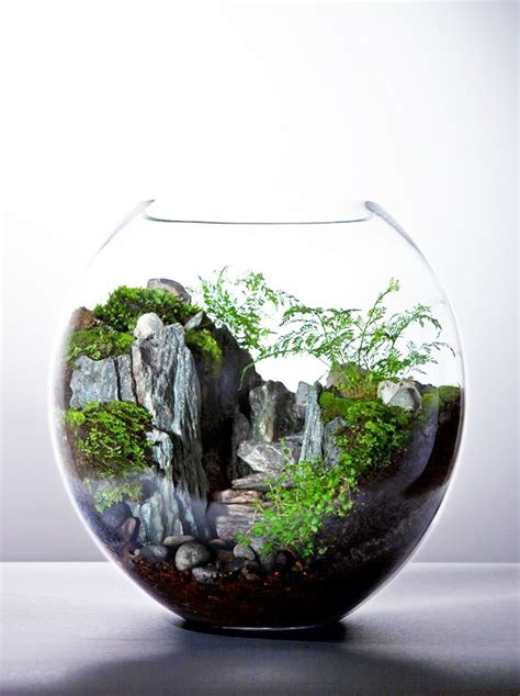 beautiful terrarium terrarium pinterest