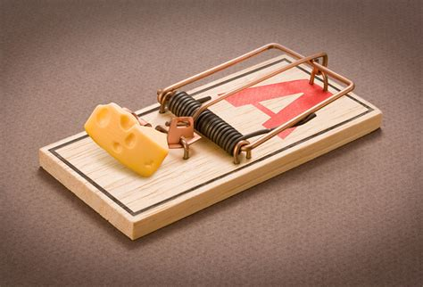 mouse benching mouse trap mousetrap