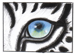 imagenes ojos de tigre tigre blanco dibujo imagui