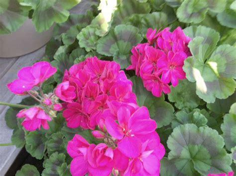Frenz Garden Center by May 2015 Archives Mcnabb Risley