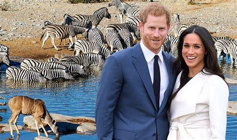 prince harry and meghan markle called perfect couple by harry and meghan honeymoon will they go to botswana or
