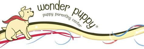 puppy preschool near me best 25 puppy classes ideas on classes k9