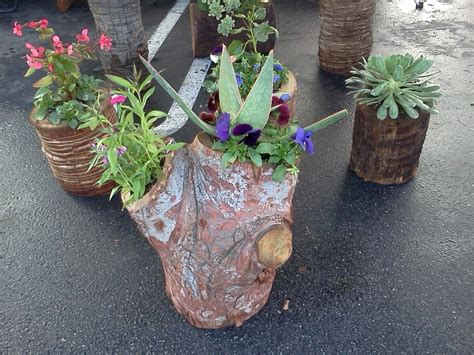 Stump Planters by 1000 Images About Stump Planters On