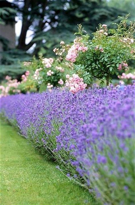 rose garden companion plants gardens traditional and garden borders