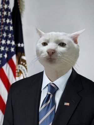 Cat In Suit Meme - serious cat in suit jpg 300 215 400 giggles pinterest