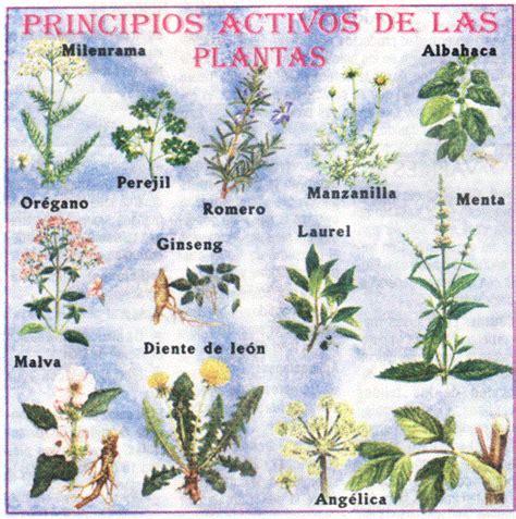 imagenes de flores medicinales propiedades y usos de las plantas medicinales y m 193 gicas