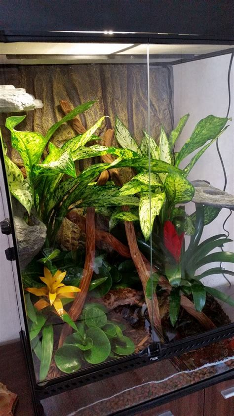 terrarium len reptielenforum onderwerp vragen m b t vivarium