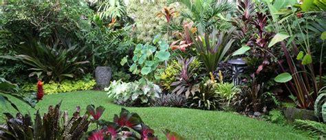 garden decoration nz how to create a tropical garden palmers garden centre