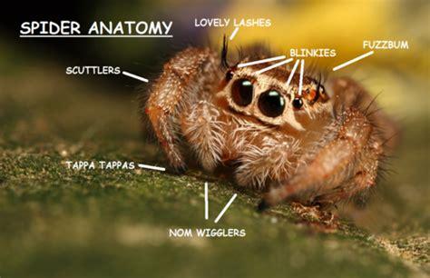 Cute Spider Memes - miss cellania spider anatomy