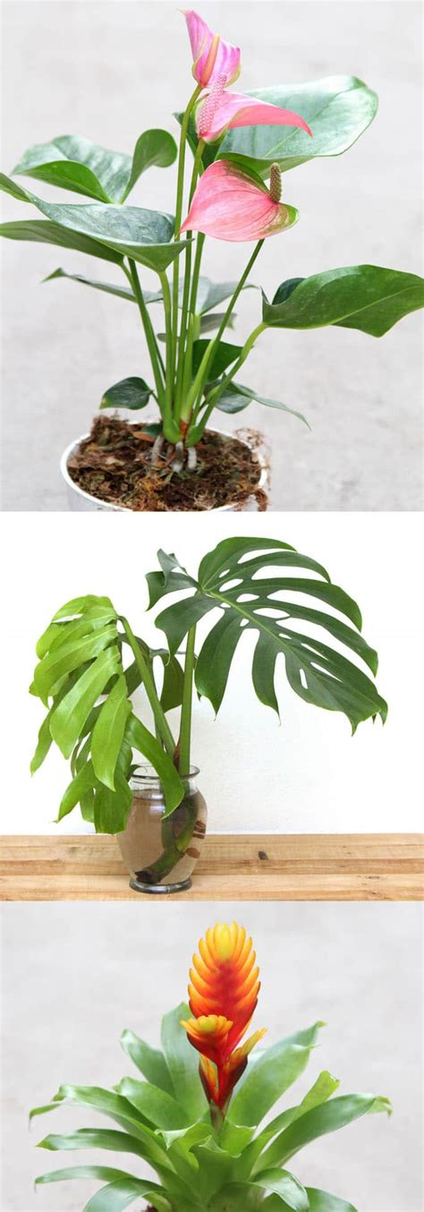 easy indoor flowers 12 easy air purifying indoor plants for beauty well